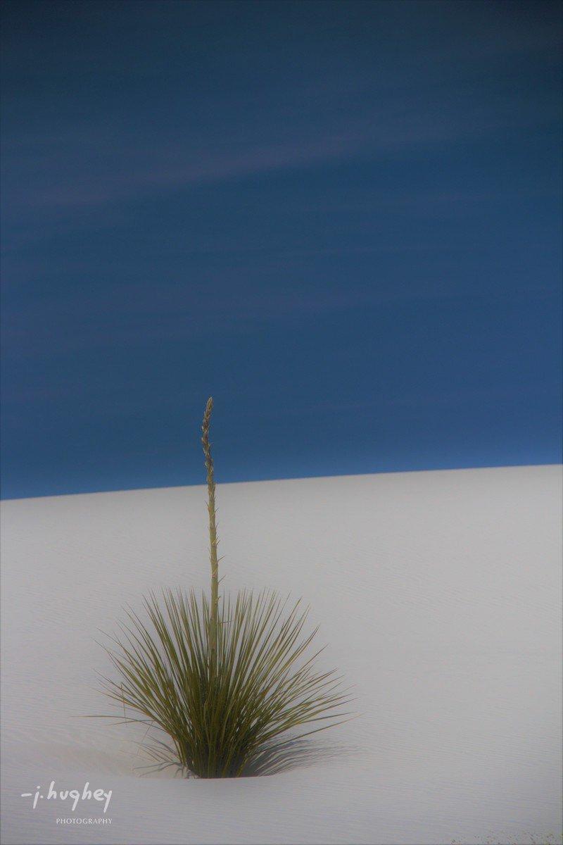 John Hughey Contemplative Fine Art Photography - Yucca